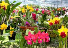 Hanoi  Flower Festival
